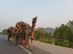 Road to Jaipur incredible india pictures