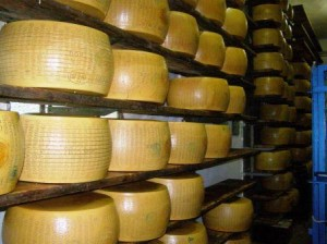 parma cheese italy