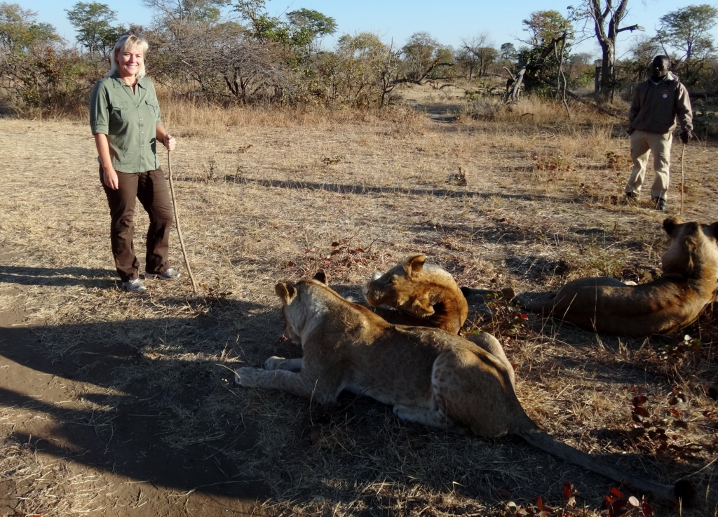 lion encounter zambia